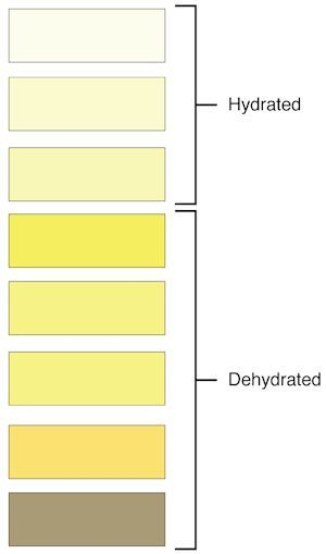 Why you need to 'Sip' an electrolyte drink?