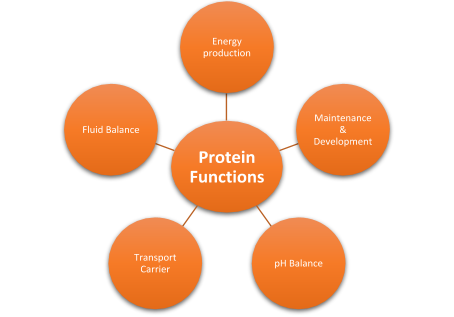 Fast&up Plant Protein Functions