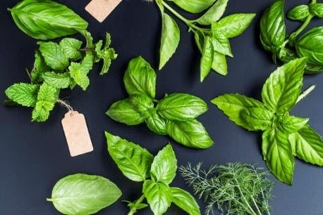 Natural Herbs for Lung Health